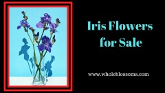 Buy Stunning Iris Flowers for Sale at Affordable Cost