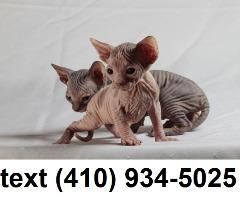 PennySaver | Pets Listings